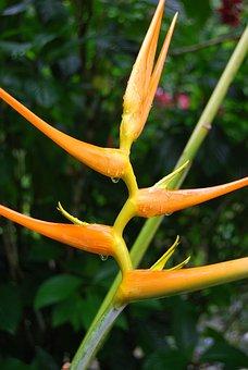 Bird Of Paradise, Flower, Strelitzia Reginae, Nature