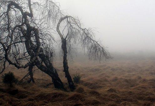 Fog, Autumn, Nature, Plant, Meadow, Mood, Atmosphere