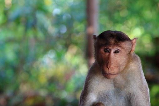 Monkey, Stare, Nature, Face, Portrait, Looking, Young