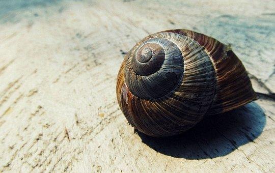 Snail Shell, Shell, Snail, Nature, Shape, Macro, Spiral