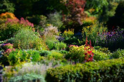 Karl Förster, Lower Garden, Perennials, Potsdam, Garden