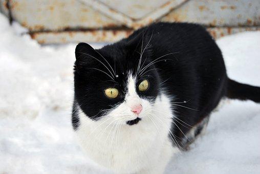 Cat, Winter, White, Animal, Cute, Pet, Snow, Mammal