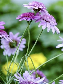 Flowers, Foliage, Leaf, Petals, Floral, Blossom