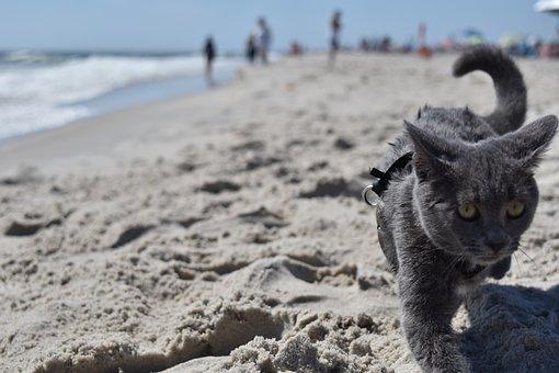 Cat, Beach, Water, Ocean, Cute, Animal, Sand, Mammal