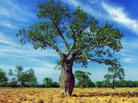 Ceiba Tree, Trees, Landscape, Scenic, Paraguay, Sky