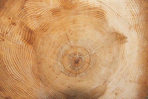 Tree, Year, Annual Rings, Wood Ring, Annular, Grain