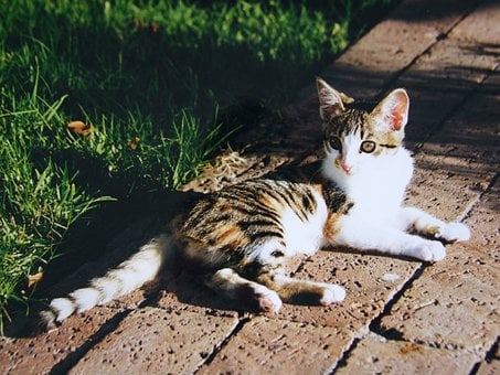 Kitten, Cat, Adidas Patched, Attention, Evening Light