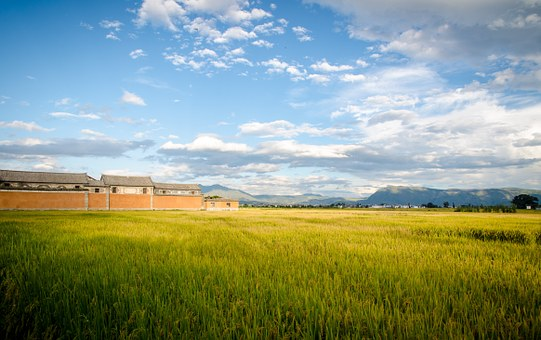 In Rice Field, Blue Sky And White Clouds, Building