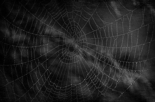 Dark, Cobweb, Halloween, Spider, Waterdrops, Scare