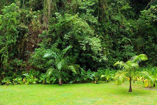 Background, Dense, Environment, Flora, Foliage, Forest