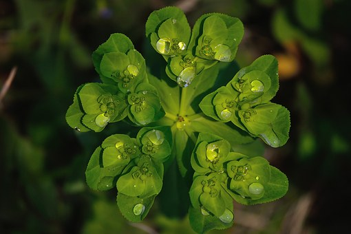Natural Waterdrops, Watrdrops On Herb