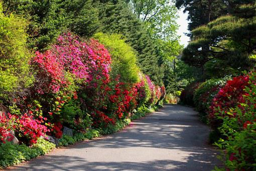 Flower Road, Flowers, Nature, Landscape