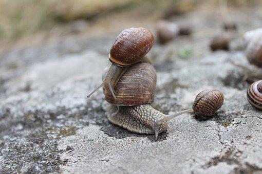 Slow, Animal, Snail, Nature, Wildlife, Shell, Climbing