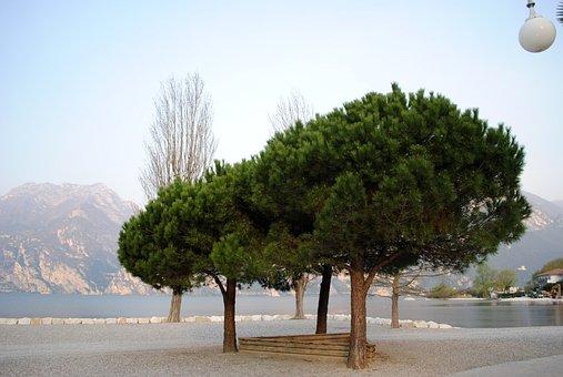 Mood, Garda, Trees, Bank, Lago Di Garda, Italy, Beach