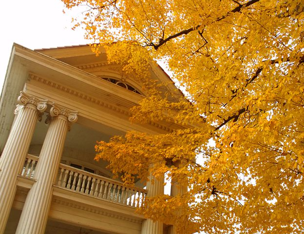 House, White, Autumn, Yellow, Leaves, Tree, Branches