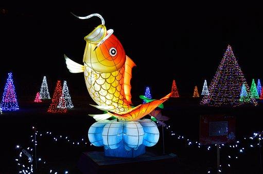 Fish, Festival Of Lights, Niagara Falls, Chinese