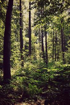 Forest, Nature, Sun, Tree, Branch, Twilight, Landscape