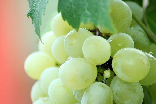Dirty, Closeup, Food, Fresh, Freshness, Fruit, Grape