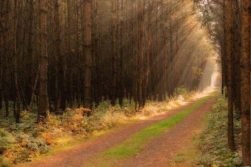 Forest, Glass Joke, Sunbeam