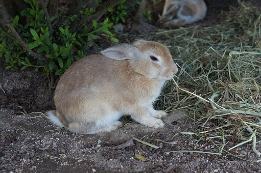 Rabbit, ōkunoshima, Hiroshima, Wild, Small Animals