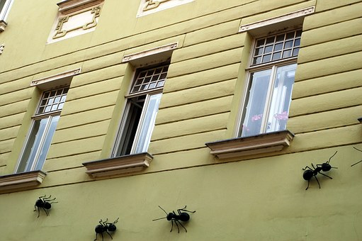 Wall, House, Facade, Ant, Art, Insect, Joke