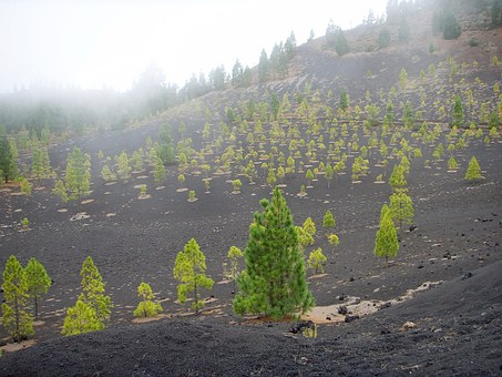 Tenerife, Lava, Trees, Green, Lunar Landscape, Nature