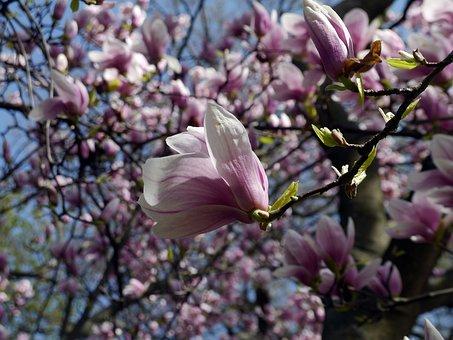 Spring, Bloom, Margaret Island
