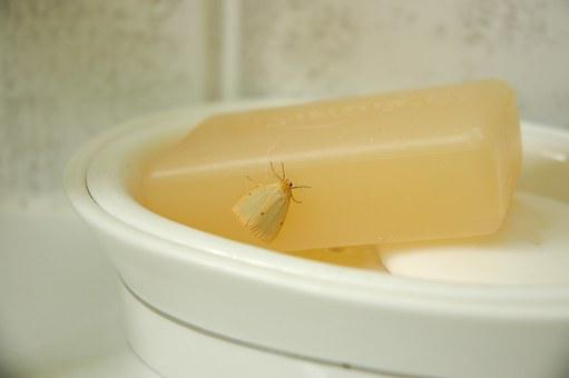 Soap, Moth, Insect, Bathsoap, Bathroom, Clean