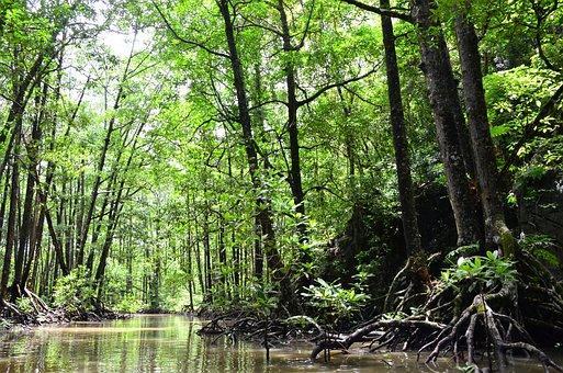 Palawan, Water, River, Mangrove Jungle, Landscape