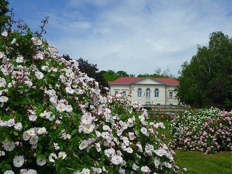 Rose Garden, Runner Rose, Building, Blue Sky, Wood