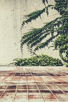 Concrete, Ivy, Metal, Plant, Rust, Vegetation, Vine
