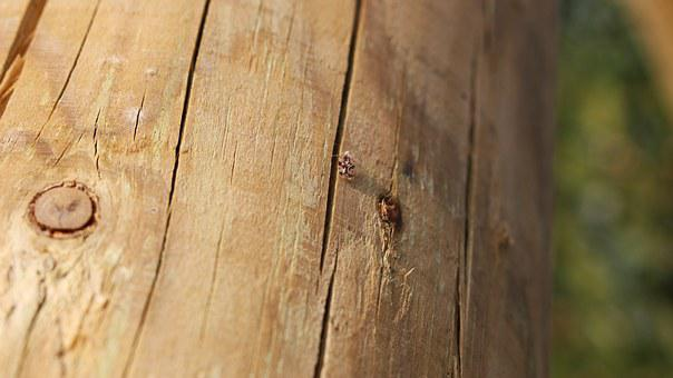 Wood, Cracked Wood, Wooden Bug, Wooden Pole