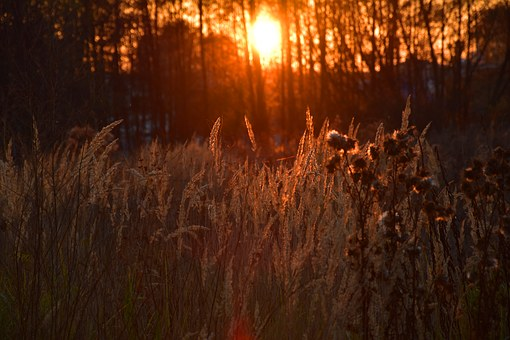West, Sunset, Veninf, Jackdaw, Orange, Grass, Dry