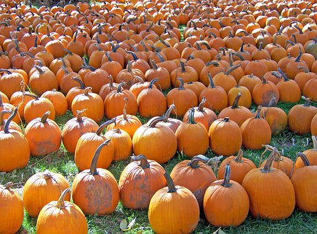Pumpkins, Autumn, Fall, Orange, Fruits, Seasonal