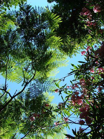 Flora, Morocco, Trees, Sky, Foliage, Expotic