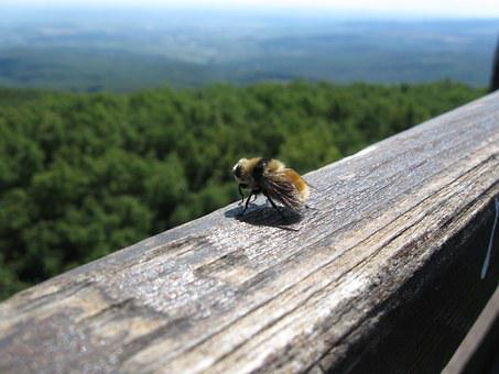 Bumblebee, Insects, Wood, Views, Nature, High, Forest