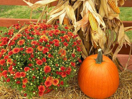 Thanksgiving, Pumpkin, Harvest, Orange, Cornstalk