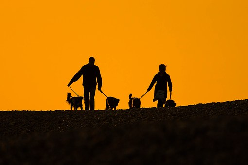 Beach, Sunset, People, Dogs, Silhouettes, A Couple Of