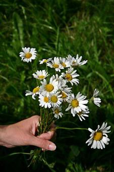 Bouquet, Wildflowers, Daisies, Meadow, Flower, Summer