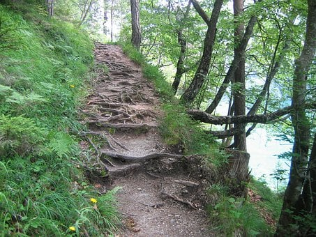 Migratory Path, Trail, Forest Path, Path, Root Path