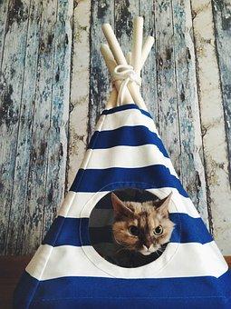 Cat, Wigwam, Tree, Boards, Pet, Kitten, Animal, Pets
