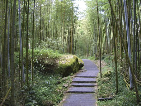 Taiwan, Xitou, Bamboo Forest, Forest, Park, Walk, Trees