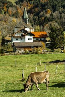 Allgäu, Village, Cow, Autumn, Agriculture, Landscape