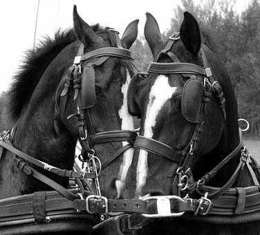 Horses, Tactics Snack, Driving Horses, Animals