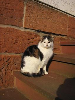 Cat, Stairs, Sun, Bauer Cat, Animal, Sit