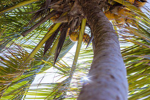 Beach, Blue, Blue Sky, Coconuts, Green, Light, Sky, Sun