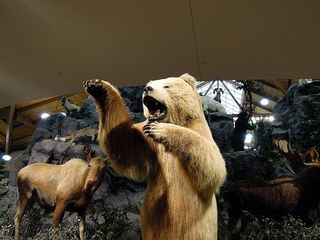 Artic Bear, Polar Bear, Bear, Animals, Models, Exhibit