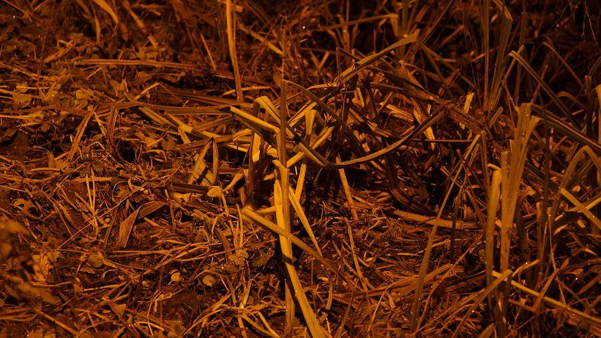 Grass, Heinänkorsia, Autumn, Ground, Street Light