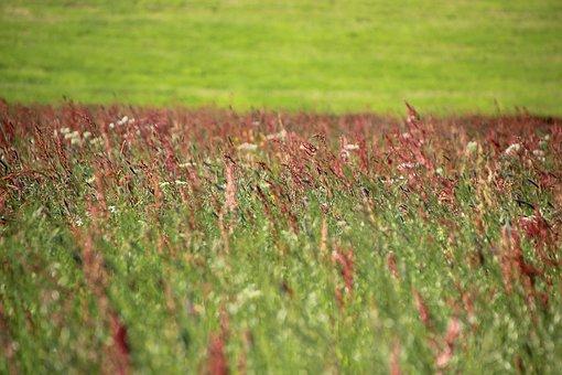 Meadow, Flower Meadow, Spring, Grasses, Hay Fever