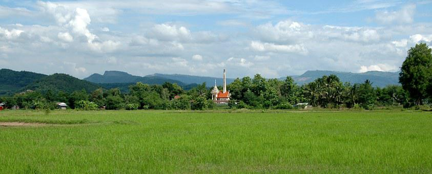 Thailand, Rice Field, Rice, Crematory, Meadow, Field